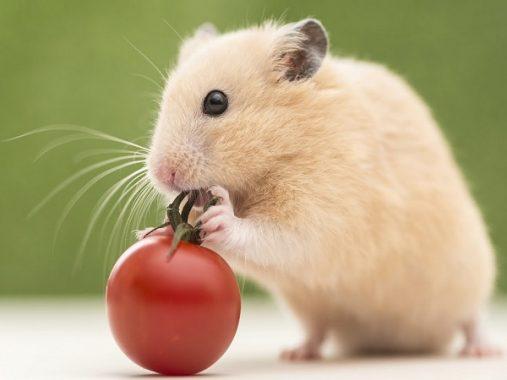 Tại sao lại nằm mơ thấy chuột?