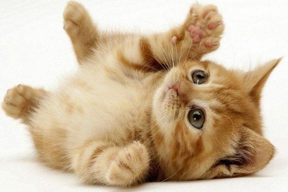 Tại sao lại mơ thấy mèo?