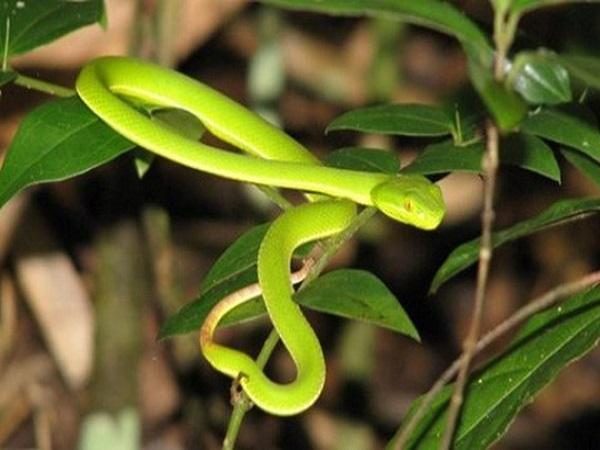 Giải mã điềm báo giấc mơ thấy rắn