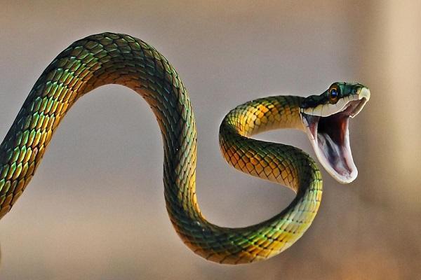 Lý giải điềm báo giấc mơ thấy rắn