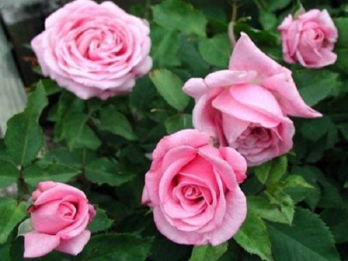 Nằm mơ thấy hoa đánh con gì? Ý nghĩa mơ thấy hoa